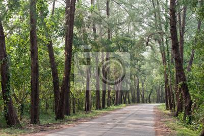 Droga w lesie.