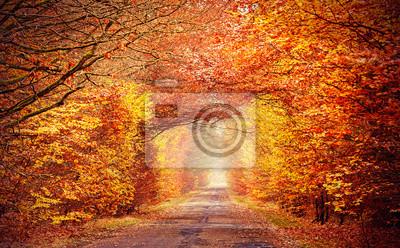 Droga w mglisty jesienny las, intensywne kolory filtrowane.