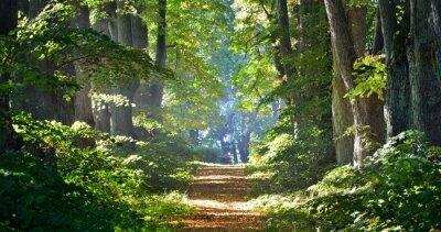 Obraz Droga w pięknym lesie w godzinach porannych