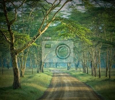 Droga w tajemniczym lesie
