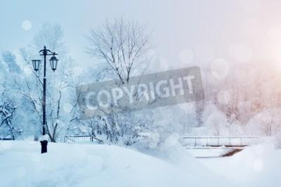 Obraz Drzewa zimą w Krainie Czarów. Zimowe sceny. Boże Narodzenie, Nowy Rok tle