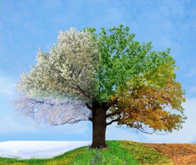 Obraz Drzewo cztery pory roku