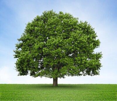 Drzewo ( dąb) na łąki i niebieskim tle nieba
