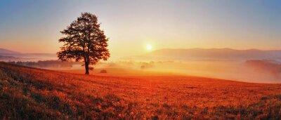 Obraz Drzewo i słońce