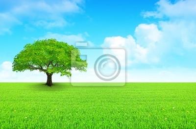 drzewo na łące i pochmurne niebo