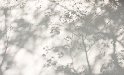 Obraz Drzewo pozostawia cień na ścianie Natura Abstrakcyjna tła