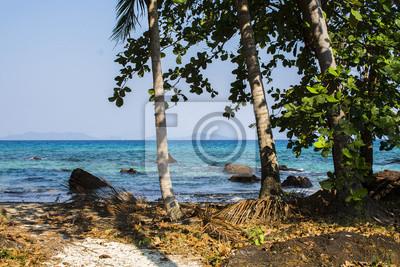 Drzewo przy piaska plażą z jasną wodą morską i niebieskim niebem. Wyspa w Zatoce Tajlandzkiej.