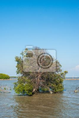 Drzewo w wodzie w lesie namorzynowe.
