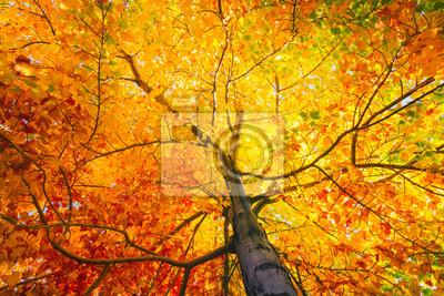 Obraz Drzewo z kolorowych liści w jesieni