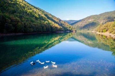Obraz Ducks on the Borabay Lake in Amasya
