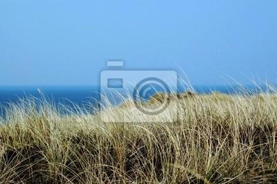 Dune trawa