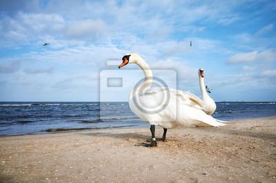 Dwa białe łabędzie na plaży