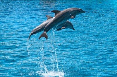 Obraz Dwa delfiny skakać wyżej Bluewater