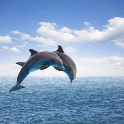 Obraz dwa delfiny skoków