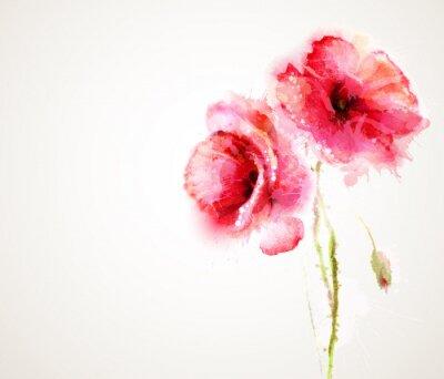Obraz Dwa kwitnienia czerwone maki. Powitanie-card.