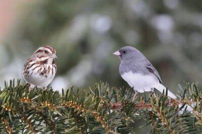 Obraz Dwa ptaków na gałęzi