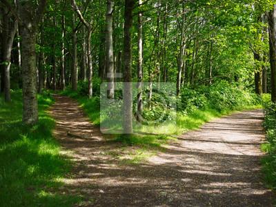 Obraz Dwie drogi w lesie, Irlandia Północna