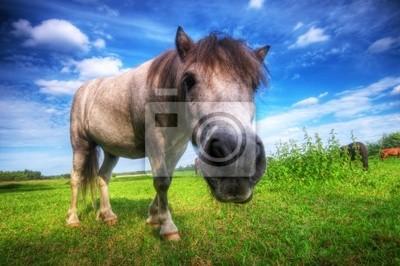 Dziki młody koń na polu