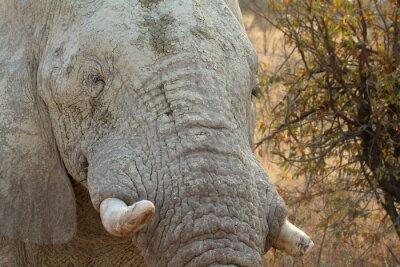 Obraz Elefanten im Etosha Park w Namibii