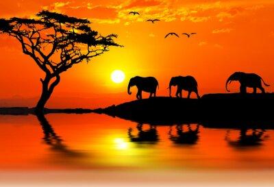 Obraz elefantes por la montaña