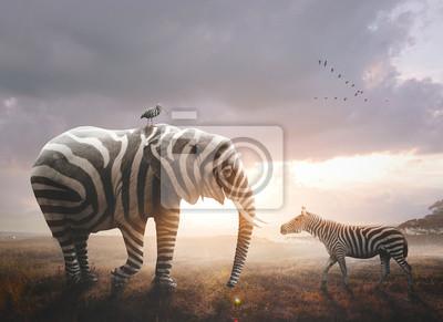 Obraz Elephant with zebra stripes