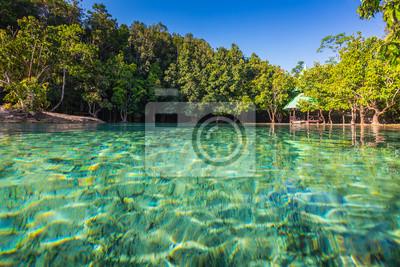 Emerald Pool jest skryte w lesie namorzynowe basen