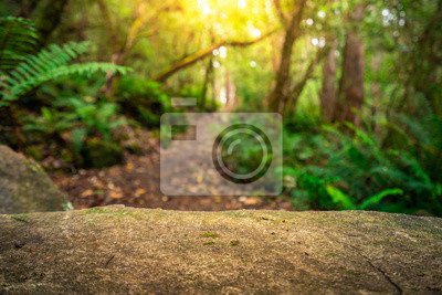 Obraz Empty rock table for product display in jungle of Tasmania, Australia. Nature product advertisement concept.
