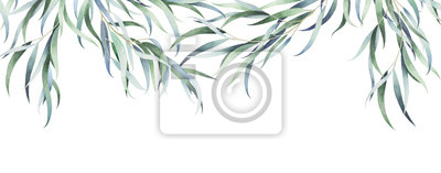 Obraz Eucalyptus branches isolated on white. Watercolor hand drawn illustration.