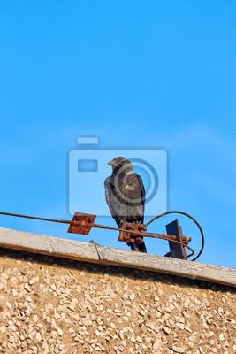 Europejski jackdaw obsiadanie na dachu.