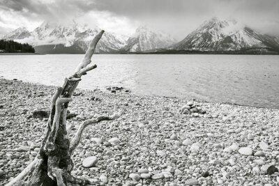 Fallen tree on the lakeside, selective focus, Grand Teton National Park, Wyoming, USA.