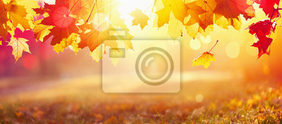 Obraz Falling Autumn Maple Leaves Natural Background