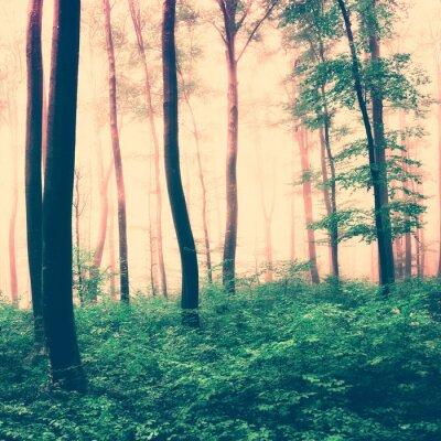 Obraz Fantasy las scena światło