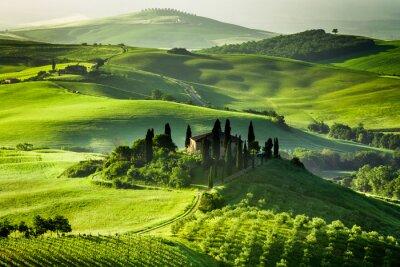 Obraz Farm gajów oliwnych i winnic