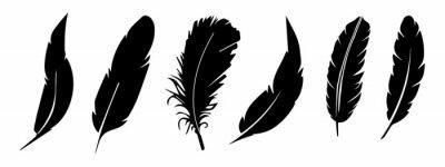 Obraz feather vector collection