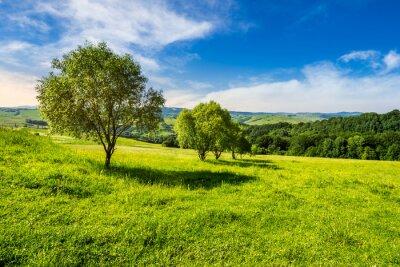 Obraz few trees on hillside meadow at sunrise