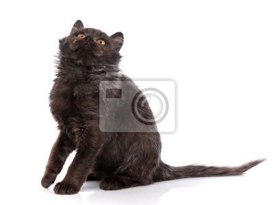 www czarna cipka obraz com małe pusy fotki