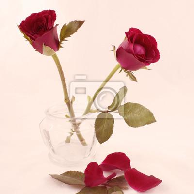 Obraz Filtrowane róże sepia