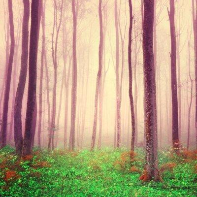 Obraz Fioletowy las scena światło
