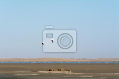 Obraz Flamingi W Oceanie Niedaleko Swakopmund Na Wymiar Różowy