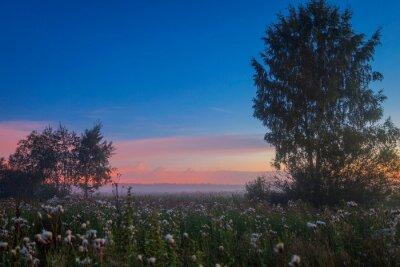 Foggy sunset in summer field