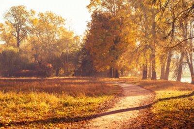 Obraz Footpath in a beautiful colorful autumn park.