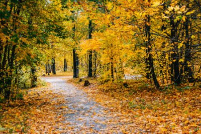 Obraz Footpath in the autumn park with colorful trees and leaves