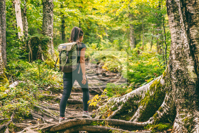 Obraz Forest hike trail hiker woman walking in autumn fall nature background in fall season. Hiking active people lifestyle wearing backpack exercising outdoors.