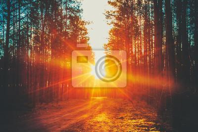 Obraz Forest Road Sunset Sunbeams
