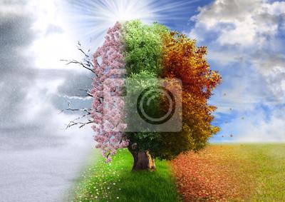 Obraz Four season tree, photo manipulation, magical, nature