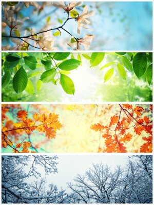 Obraz Four seasons. A pictures that shows four different pictures representing the four seasons: winter, spring, summer and autumn.