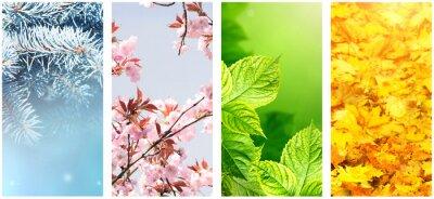 Obraz Four seasons of year