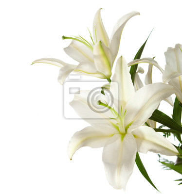 """fragment z bukietem białych lilii """" na białym tle"""