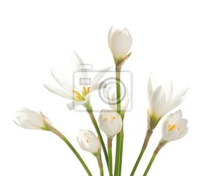 """fragment z bukietem białych lilii """"na białym tle. Zephy"""