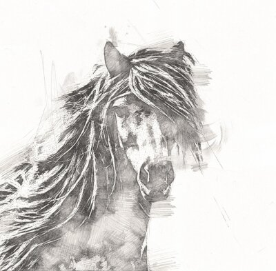 Obraz freehand horse head pencil drawing